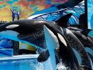 SeaWorld Orlando Offers Free Parking from 2016