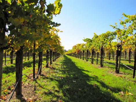California Full Day Wine Country Tour - Napa Valley and Sonoma Valley
