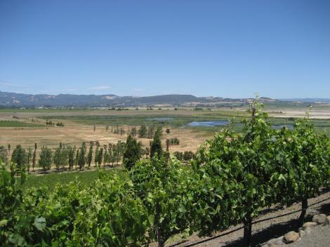 California Half Day Wine Country Tour - Sonoma Valley