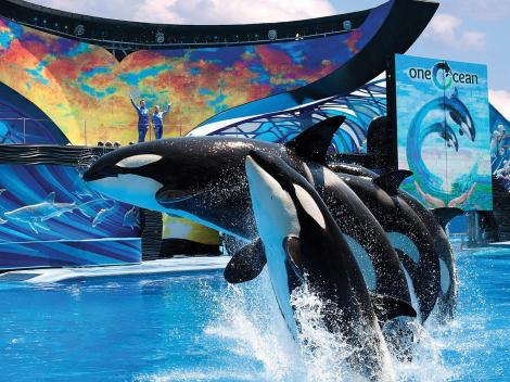 Go San Diego Card seaworld