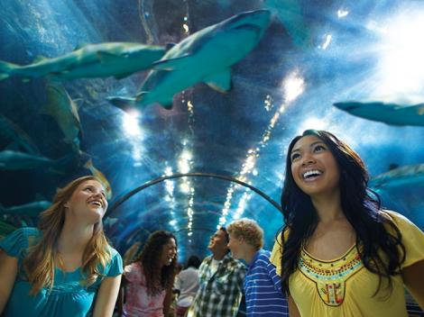 SeaWorld® San Diego Tickets