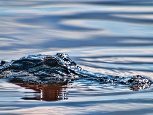 Florida Everglades Airboat Rides at Sawgrass Recreation Park