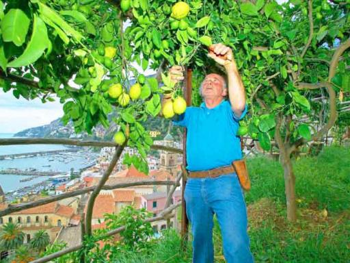 Limoncello Tasting & Scenic Cruise: Amalfi Coast Day Trip from Rome