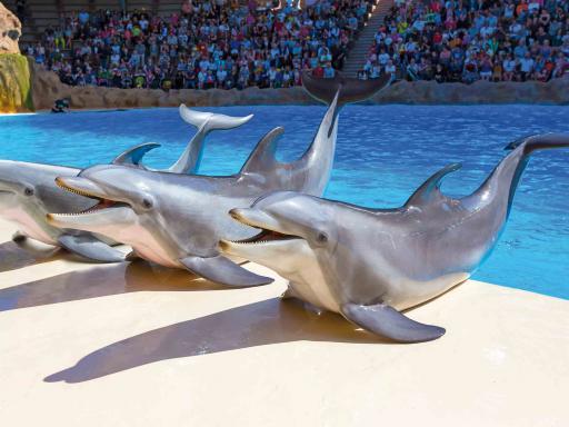 Dolphins - Loro Parque Tickets