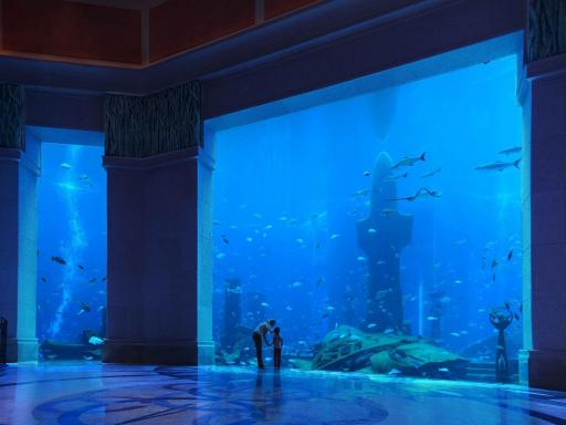 The Lost Chambers at Atlantis The Palm