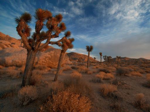 Mojave Desert Shooting Adventure