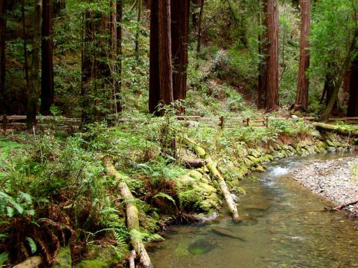 Muir Woods & Sausalito Hop-On Hop-Off Bus Tour