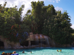 6 Things You Get for FREE with Your Discovery Cove Tickets