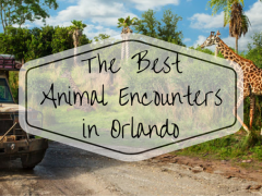 Discover the Best Animal Encounters in Orlando
