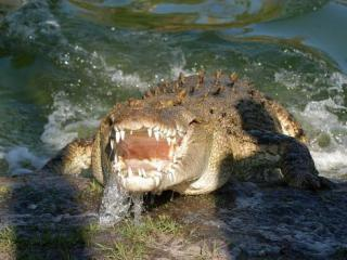Free Gatorland Admission Tickets with Disney, Universal and SeaWorld Tickets