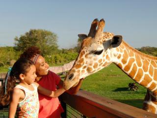 Busch Gardens Serengeti Safari Tickets