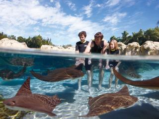 Discovery Cove without Dolphin Swim