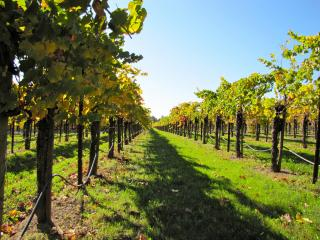 California Full Day Wine Country Tour from San Francisco