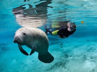 Florida Adventure Tour - Swim with Manatees