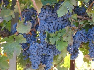 Half Day California Wine Country Tour