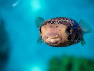 Monterey Bay Aquarium Skip-the-Line General Admission Ticket