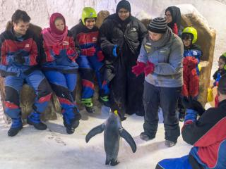 Ski Dubai Penguin Encounter
