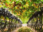 Half Day California Wine Country Tour from San Francisco