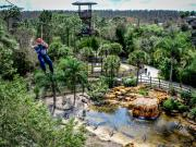 Gatorland and Zipline with Transportation