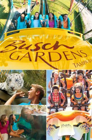 Busch gardens tampa bay tickets and prices atd ireland - Busch gardens tampa customer service ...