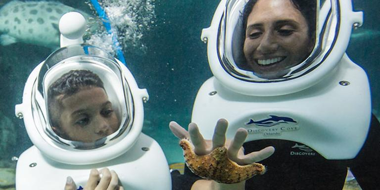 Save 40% on Discovery Cove SeaVenture Experience